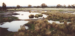 Some of the 30 ponds of Redman Bluff Wetlands ajoining Grampians Paradise Camping and Caravan Parkland