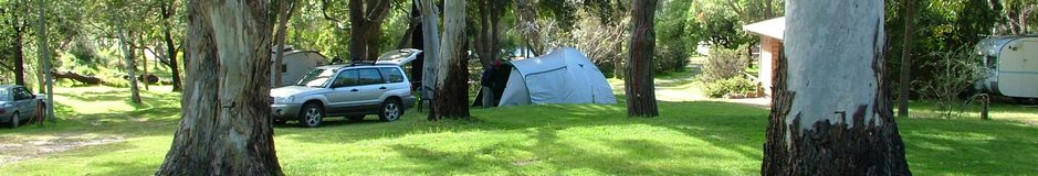 Shady grassed powered sites at Grampians Paradise Camping and Caravan Parkland